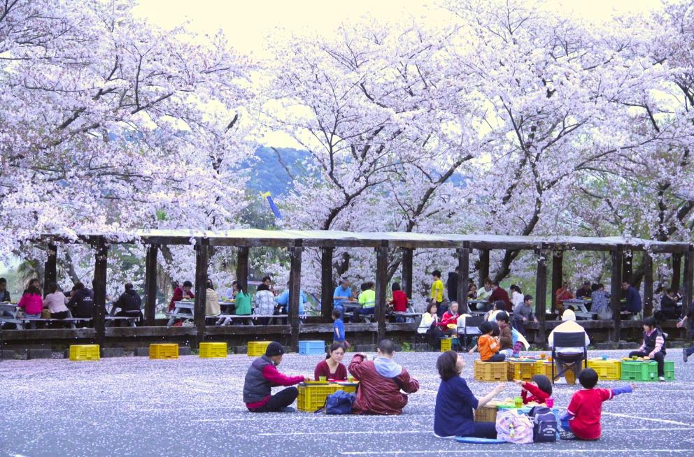 寸座 桜 風景